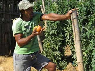 Visita a produtores de tomate no Vale do Café