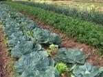 Produção de alimentos orgânicos da Fazenda São Fernando