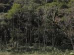 Reflorestamento na Fazenda São Fernando